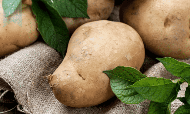 Aardappelen bewaren