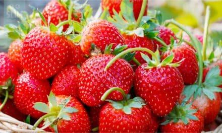 Hoe kun je aardbeien het beste bewaren?