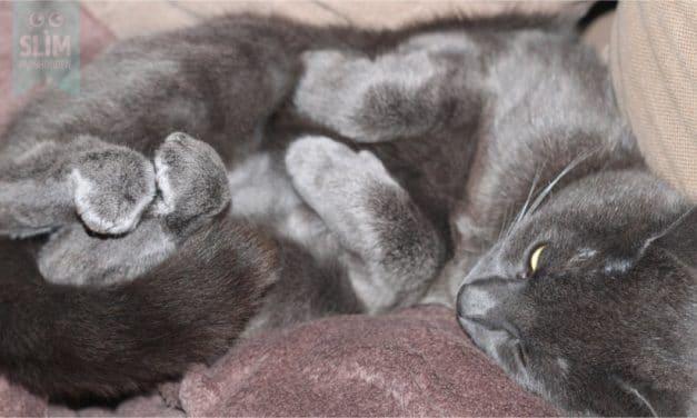 Geur van kattenurine verwijderen