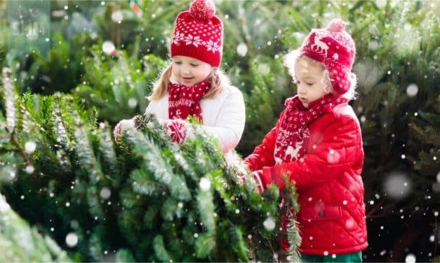Zaag zelf je kerstboom om in het bos
