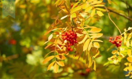 Tuinkalender november, de tuin winterklaar maken