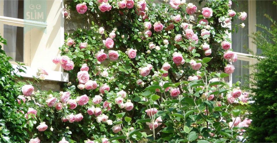 Tuinkalender juli, welke klusjes zijn er deze maand?