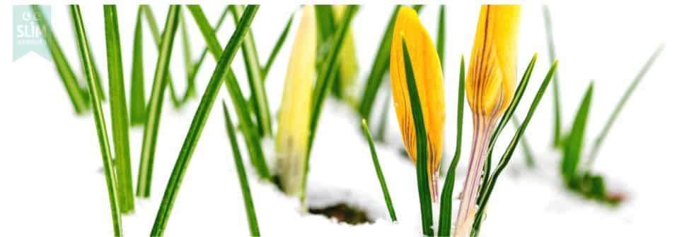 tuinkalender februari