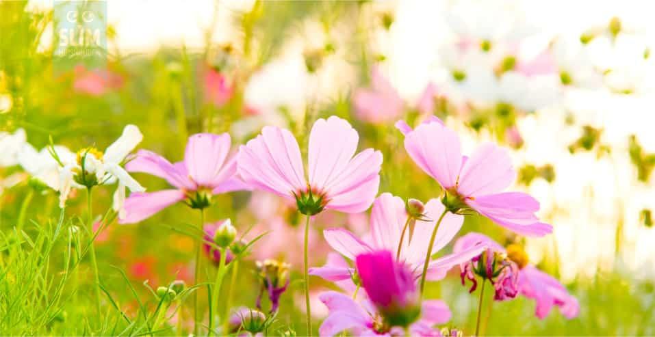 Maar de lente wist het niet….