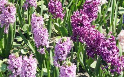Tuinkalender maart – Het tuinseizoen gaat van start
