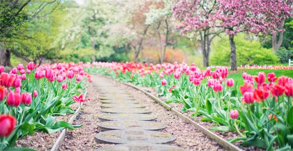 Maar de lente wist het niet….van Susan Blanco