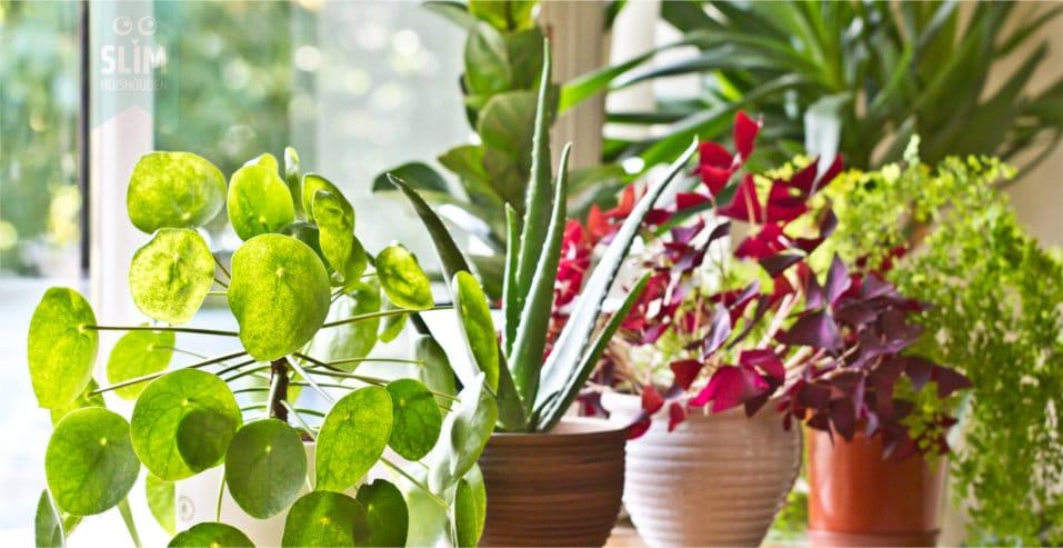 Verzorg je planten met deze slimme app