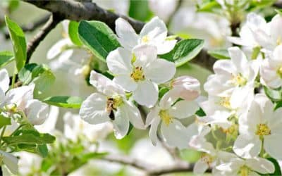Tuinkalender april – Overzicht tuinklussen