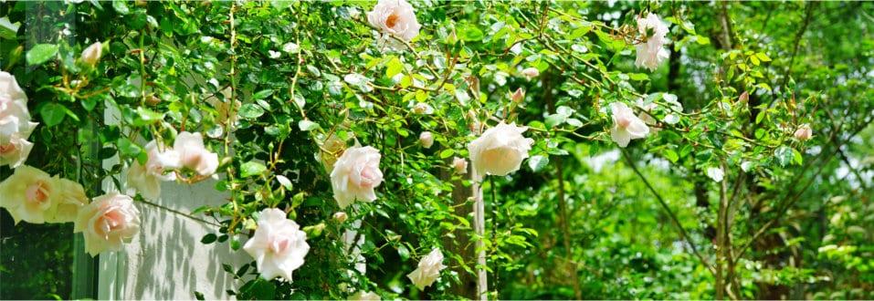tuinkalender juni