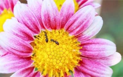 Last van mierenoverlast? Dit kun je ertegen doen